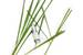 Lemongrass Insect Repellent Body Spray (2oz/60ml) - NZ-OD-IR60